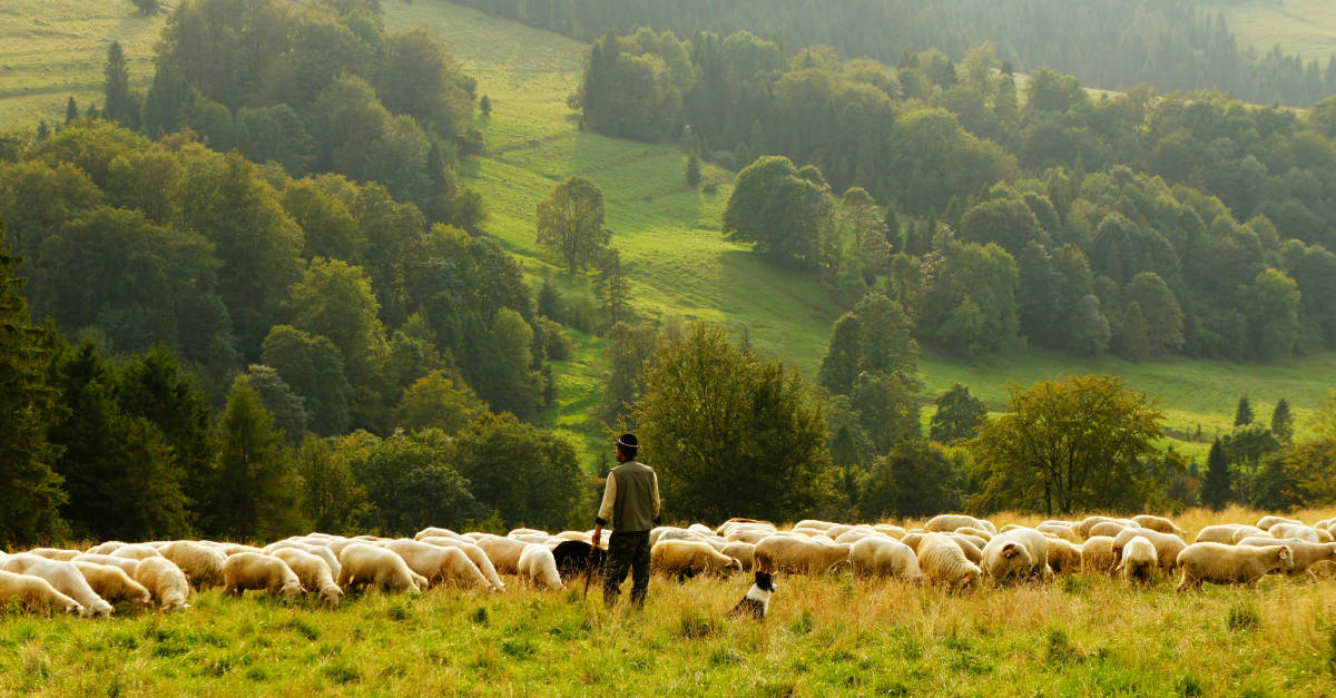 Knowing the Shepherd's Voice: 5 Spiritual Truths About False Teachers | alyssajhoward.com